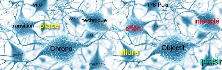 cerveau 3